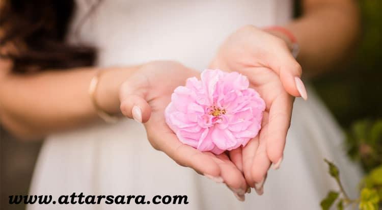 گل محمدی تر