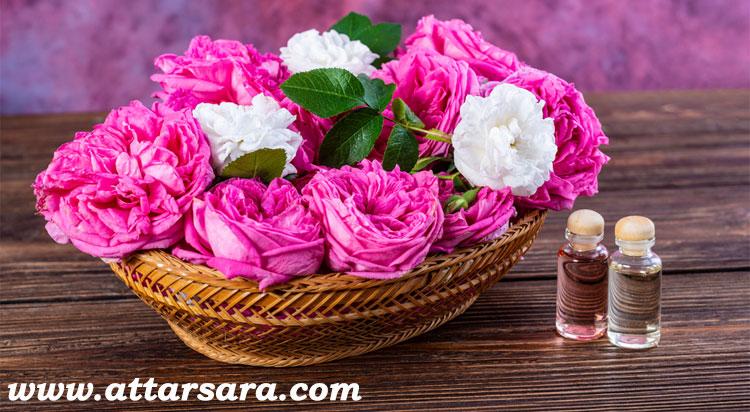 گل محمدی تازه