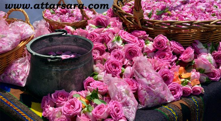 گل و گلاب